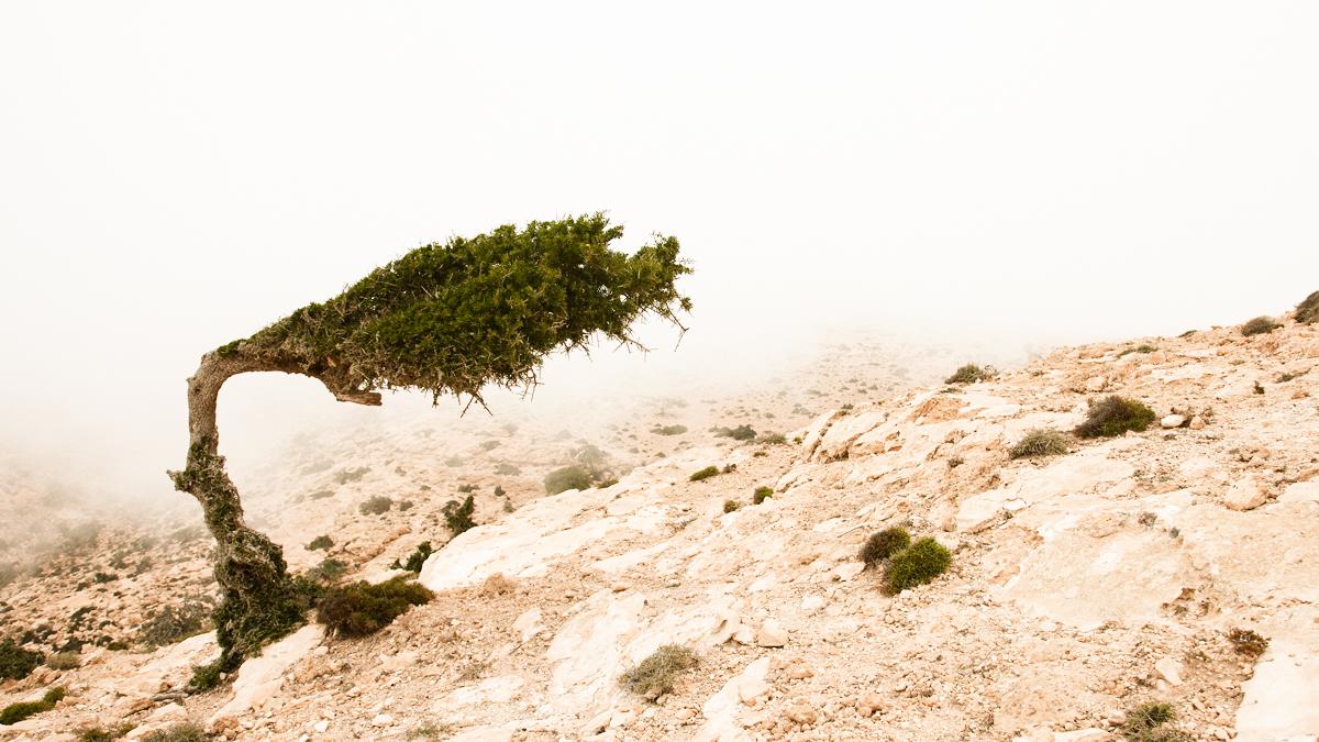 albero piegato dal vento